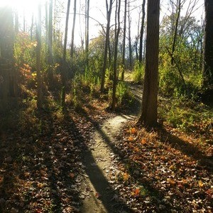 long creek preserve trail